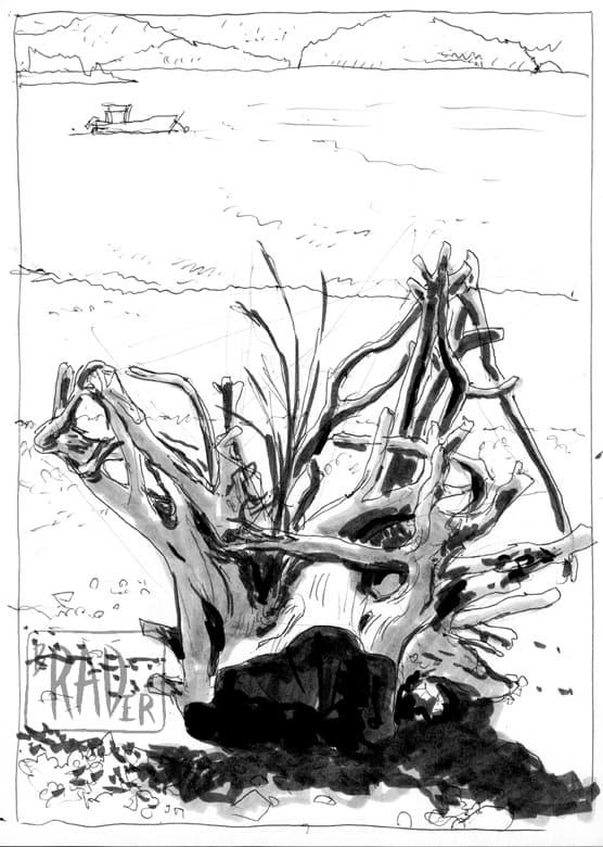 Driftwood Stump drawn from life by Brad Rader